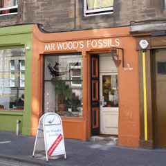 Storefront of Mr. Wood's Fossils
