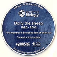 Plaque commemorating Dolly.